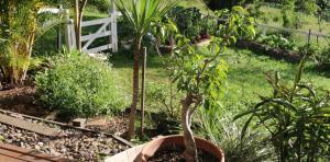LRB-garden