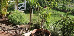 LRB-garden2