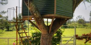 River-Oaks-treehouse-1170x578